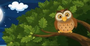 A Wise Old Owl Story