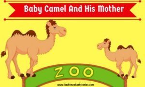 Baby Camel And His Mother