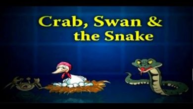Photo of Crab, Swan And The Snake
