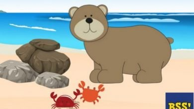 Photo of The Bear And The Crabs