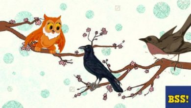 Photo of The Crow, Cuckoo And The Owl