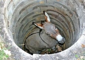 The Donkey In The Well Story