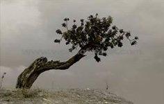 The useless tree